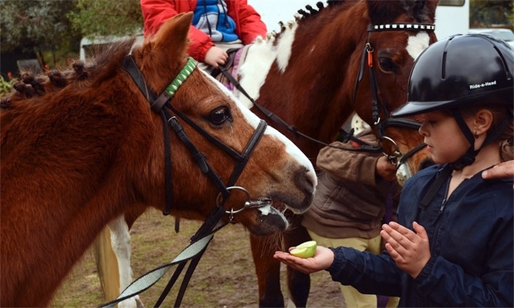 Horse Riding Lessons from R125 at Fat Pony Riding Centre
