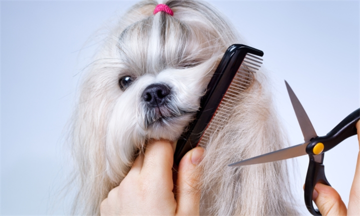 R99 for a Full Groom and Cut for a Small Dog at 4 Pet's Sake