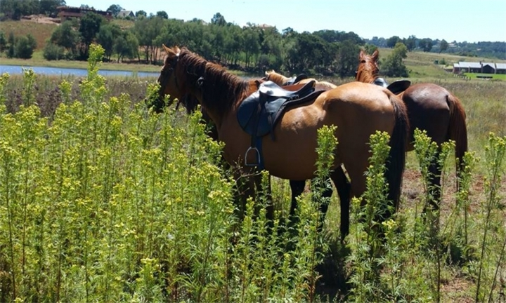 90-Minute Outride including Venue Hire for R350 for Two with ESDA