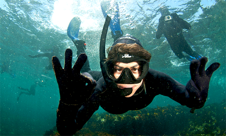 Snorkeling with Seals from R299 for One with Cape Town Bucketlist
