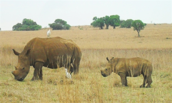 Breakfast and a Game Drive from R192 with Rietvlei Coffee Shop