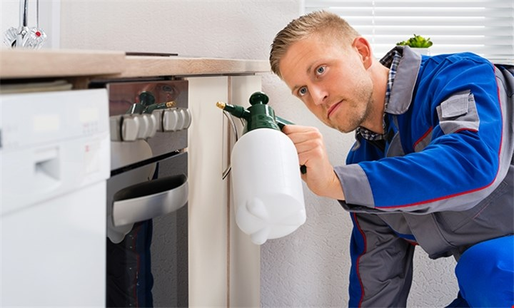 Pest Control for your Home or Flat with Leap Pest Control
