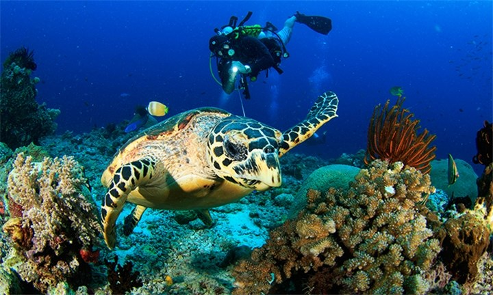 Mozambique: 4-Night Scuba Diving Getaway for Two with Scuba Crew