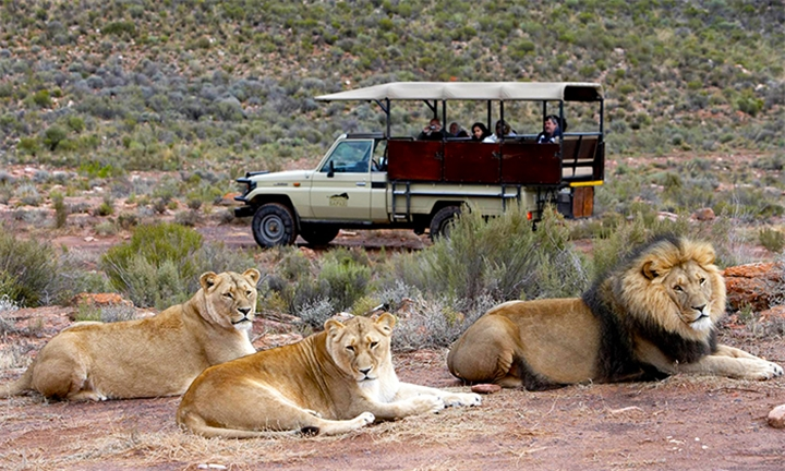 Day Trip Safari: Welcome Drinks, Breakfast Buffet, Game Drive & Lunch for Two at Aquila Private Game Reserve