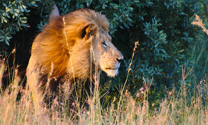 Pretoria: 2 or 3-Night Anytime Stay for Two Including a Game Drive at Thorn Tree Bush Camp