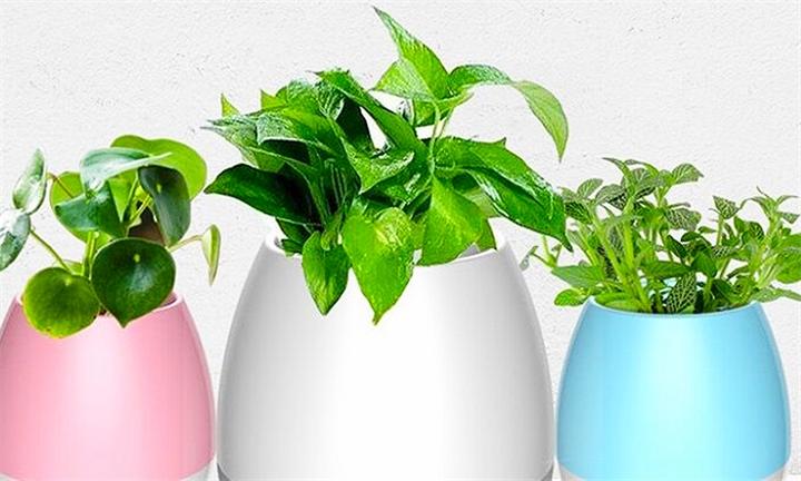Musical Flowerpots for R449