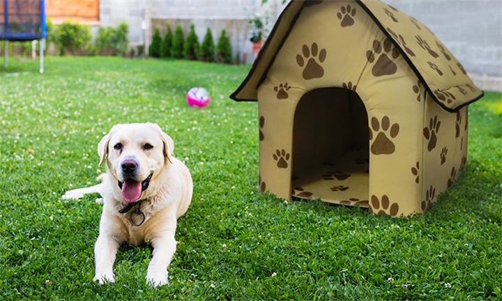 Portable Dog House for R229
