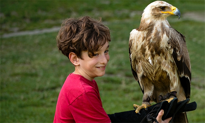 Entrance for up to Four Including A Personal Encounter with Wahlberg's Eagle, Owls and Show Passes at Eagle Encounters at Spier