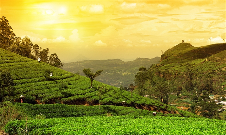 Sri-Lanka: 7-Night Stay Including Transfers, Entrance Fees and Meals
