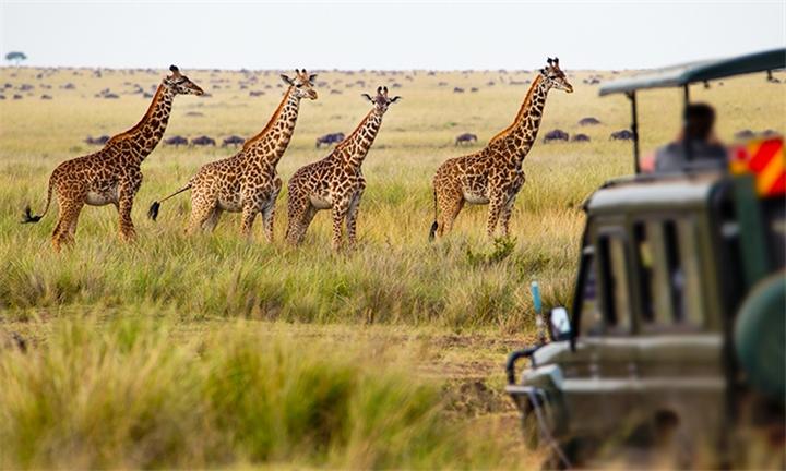 11-Day Serengeti Safari and Zanzibar Experience