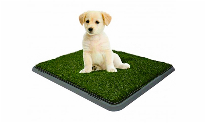 Small Dog Potty (40x50cm) for R199