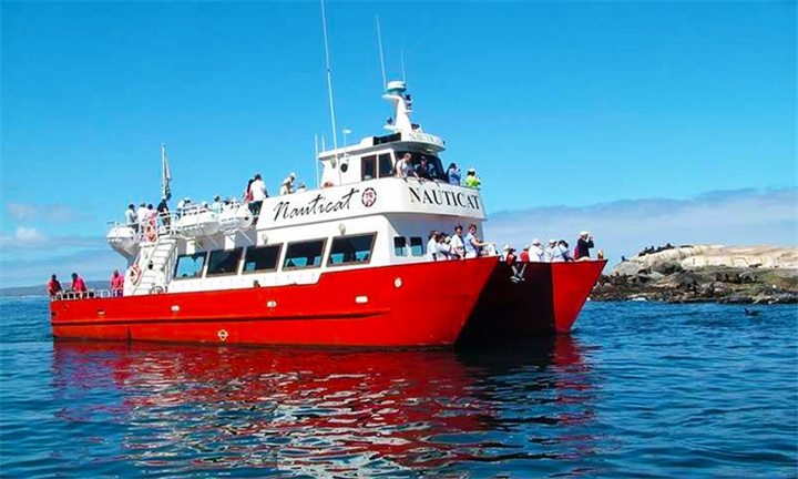 Seal Island Boat Trip for Two Adults with Nauticat Charters