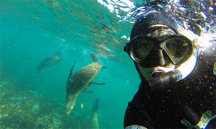 Snorkel with Seals for One or Two with Seal Snorkeling Cape Town