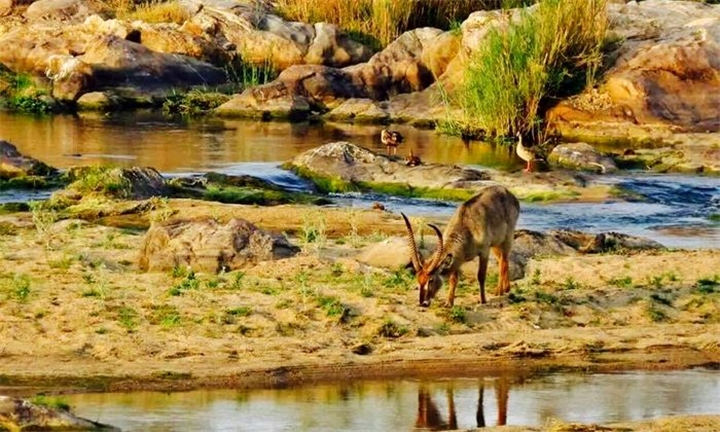 Mpumalanga: 2-Night Anytime Self-Catering Stay for up to Six at Mongoose Bush House