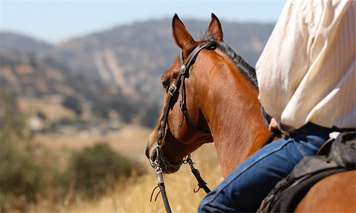 Lunch and 1-Hour Horse Trail Ride for Two at Unathi Game Lodge
