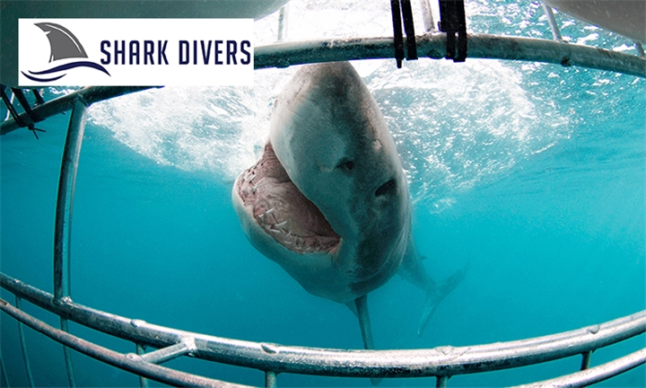Shark Cage Diving Experience for One or Two Including Breakfast and Snacks