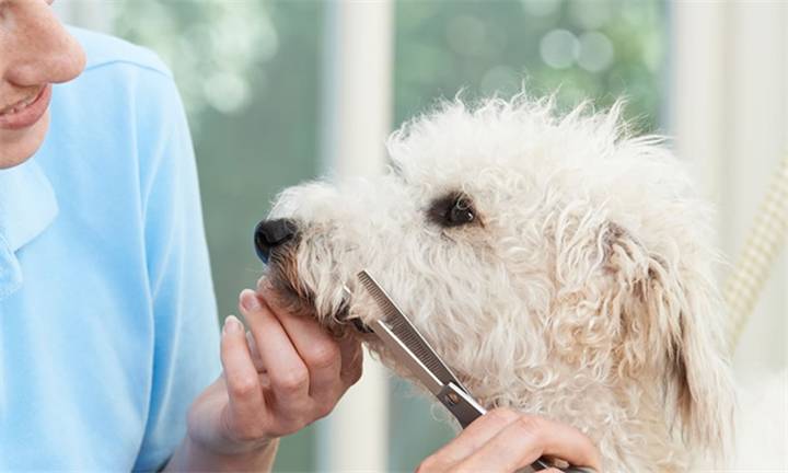 Online Course: Dog Grooming Diploma from New Skills Academy