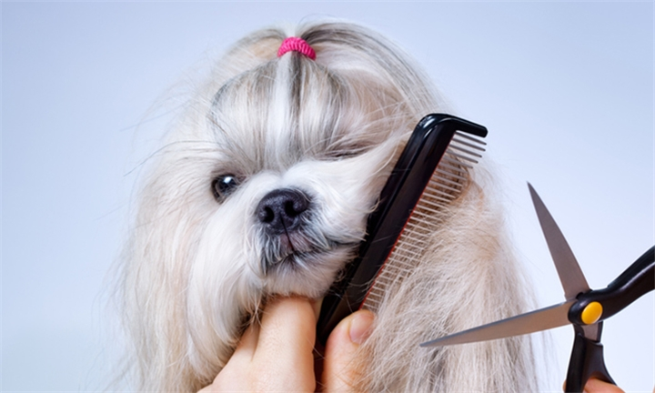 Wash, Brush and Cut for your Dog at the Bow Tie Doggie Parlour