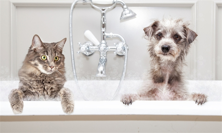 Online Course: Dog and Cat Grooming with Contempo Learning