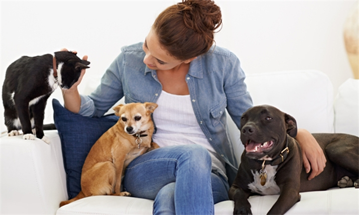Online Course: Veterinary Assistant with Pet Addict