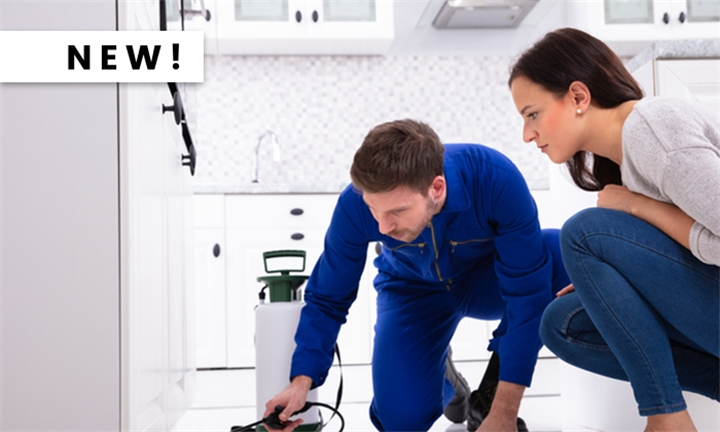 Pest Control for an Apartment, Cottage or Townhouse from Pest Control Gauteng