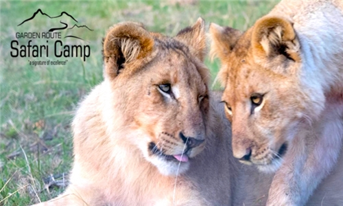 Garden Route: 1 or 2-Night Anytime Stay for Two Including Breakfast& 20% off a Safari Game Drive at Garden Route Safari Camp