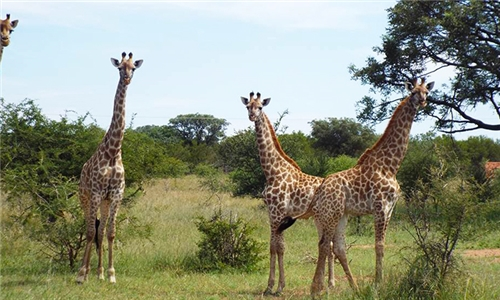 North West: 2-Night Stay for Two Including Horseback Safari and Breakfast at Unathi Game Lodge
