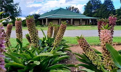 Free State: 1 or 2-Night Anytime Stay for Two at The Phatt Chef Roadside Diner and B&B
