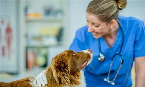 Online Course: Veterinary Nursing Level 3 with One Education