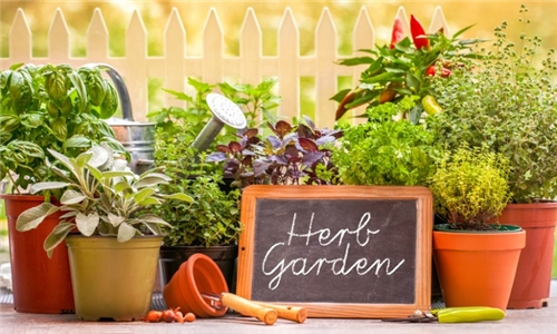 Learn with an Expert Online – The Herb Garden