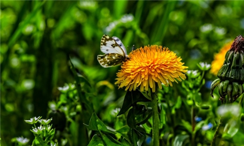 Learn with an Expert Online – Gardening for Wildlife