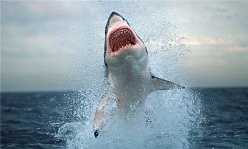 Half-Day Shark Cage Diving Trip in Cape Town for Adult or Kids – under 12 with a Light Lunch from Apex Shark Expeditions