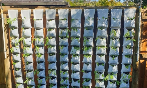 Grow your Own Vertical Veg Patch at Home with Agri Urb Grow Kits Delivered to your Door