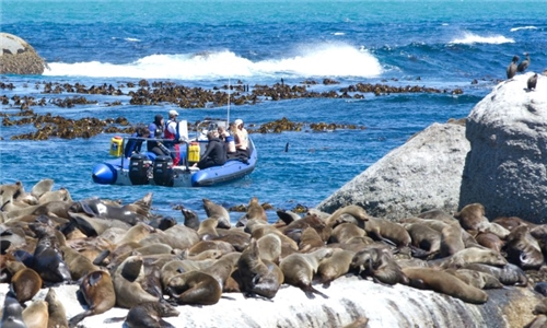 Boat Ride to Seal Island with Animal Ocean Expeditions