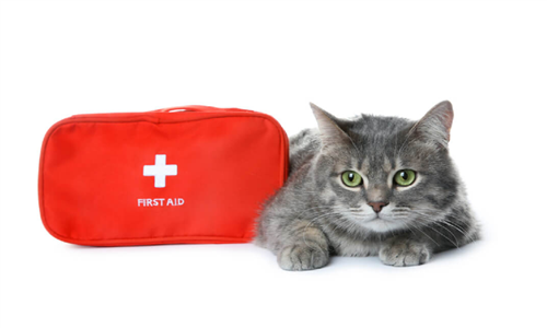 Online Course: Pet First Aid and CPR from Knowledge Door