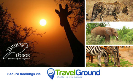 4-star bush break to Kruger National Park South for 2! Stay at Turaco Lodge in a luxury room from R850 per night with breakfast