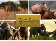 Wildlife photography course plus an introduction to Photoshop Lightroom for only R599 at Big 5 Photos, Randburg