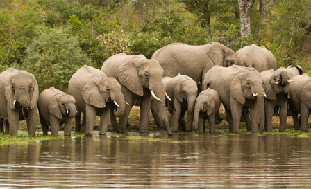 Limpopo: 2-night African getaway for 2 including breakfast at Lukafrica Riverside Chalets & Safaris for R1050 (save 52%)