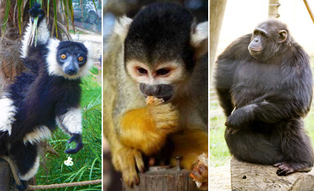 Entrance plus monkey interaction for adults and kids from R135 for 2 at Monkey Town, Somerset West (save 50%)